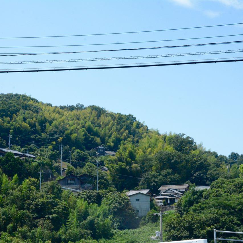 shimanami kaido cycling seto inland sea oshima bamboo forrest