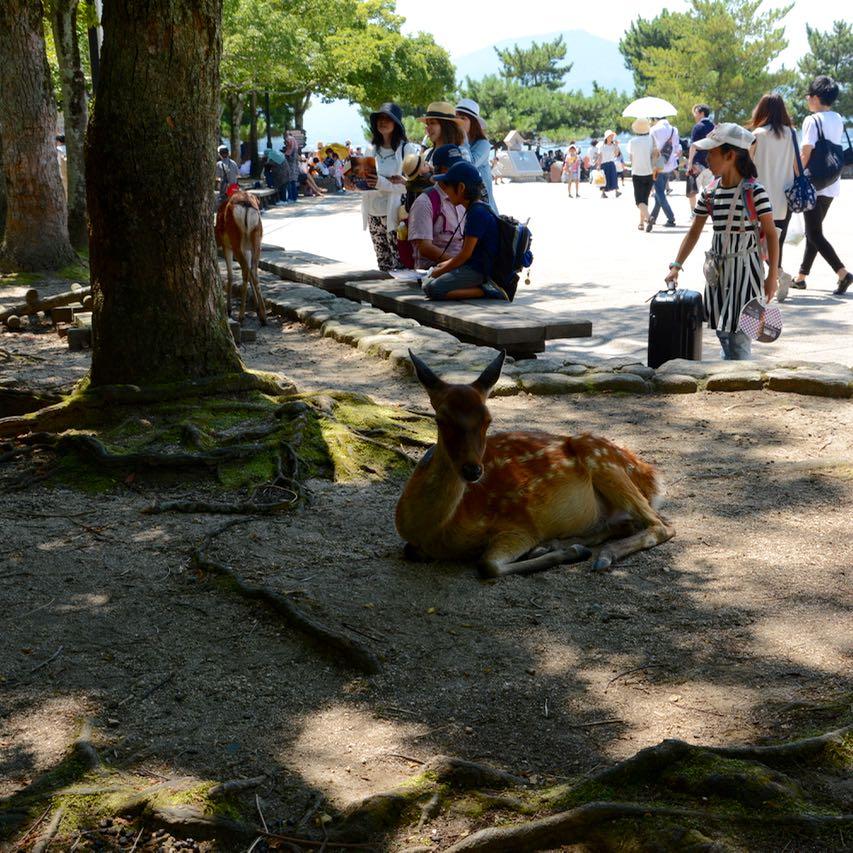 miyajima hanabi firework deer