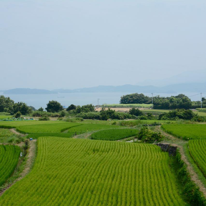teshima ieura setouchi tirennale rice fields