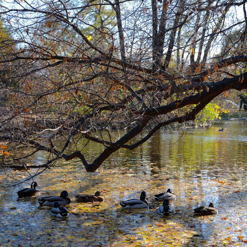 Vienna Wien Austria with children kids stadtgarten duck pond