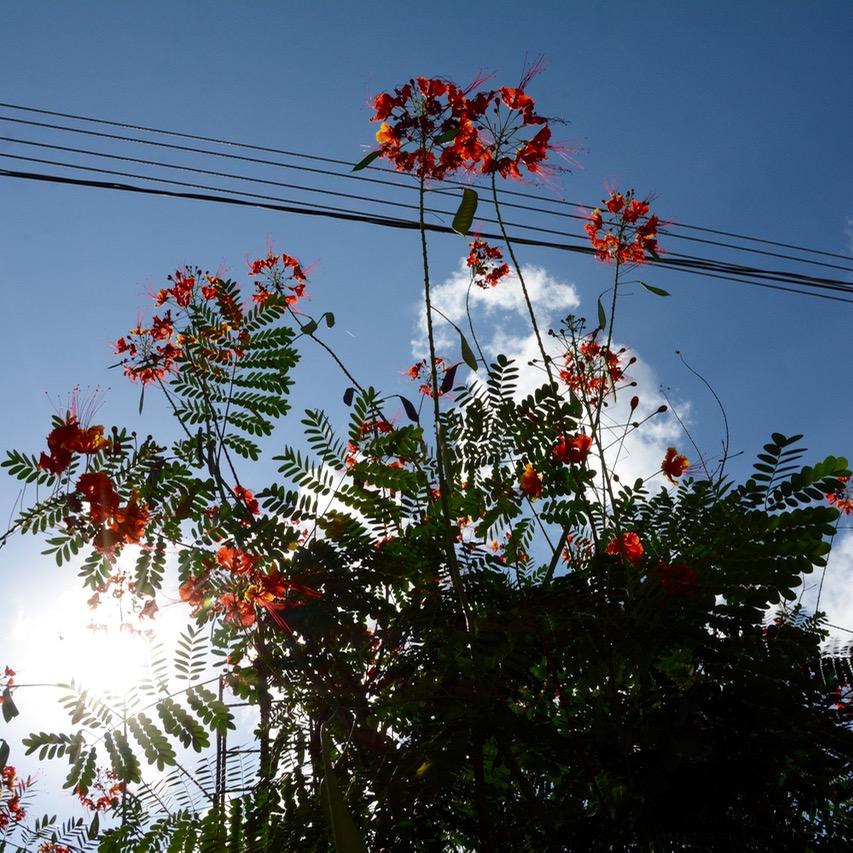 Cancun Mexico valladolid yucatan flowers