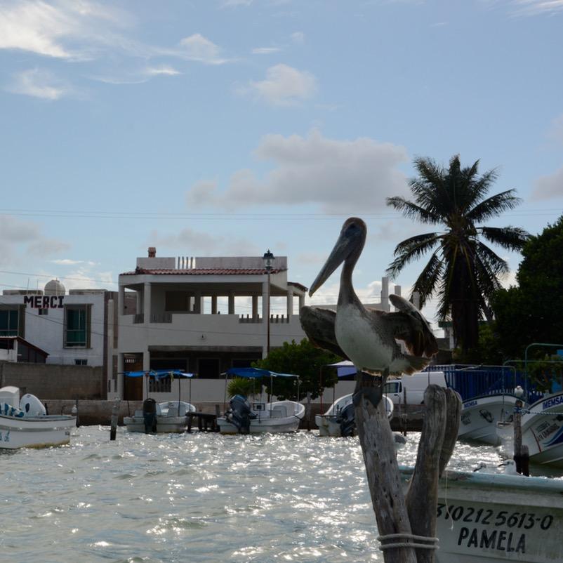 Travel with children kids mexico rio lagartos pelican