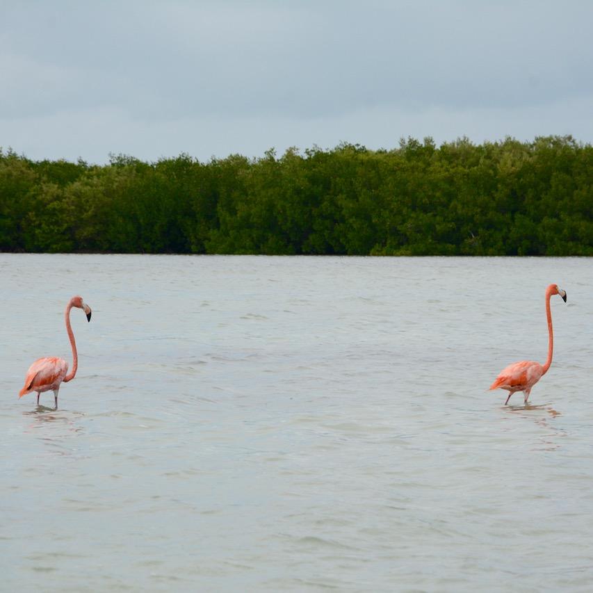 Travel with children kids mexico rio lagartos  flamingo