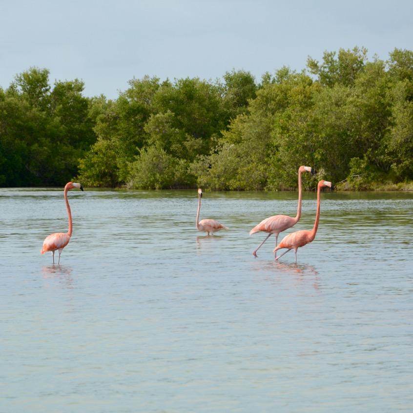 Travel with children kids mexico rio lagartos pink flamingoes