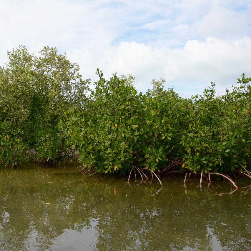 Travel with children kids mexico rio lagartos  red mangrove