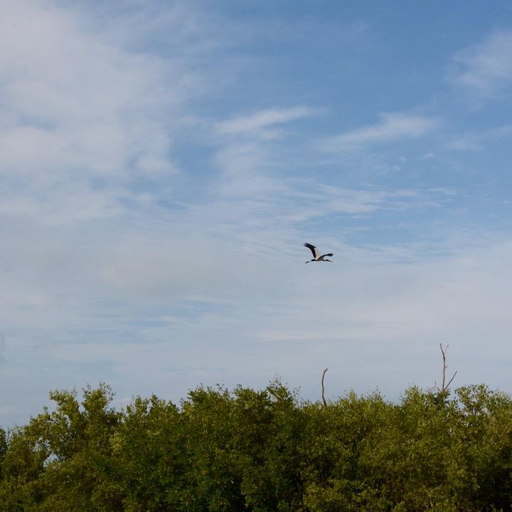 Travel with children kids mexico rio lagartos stork