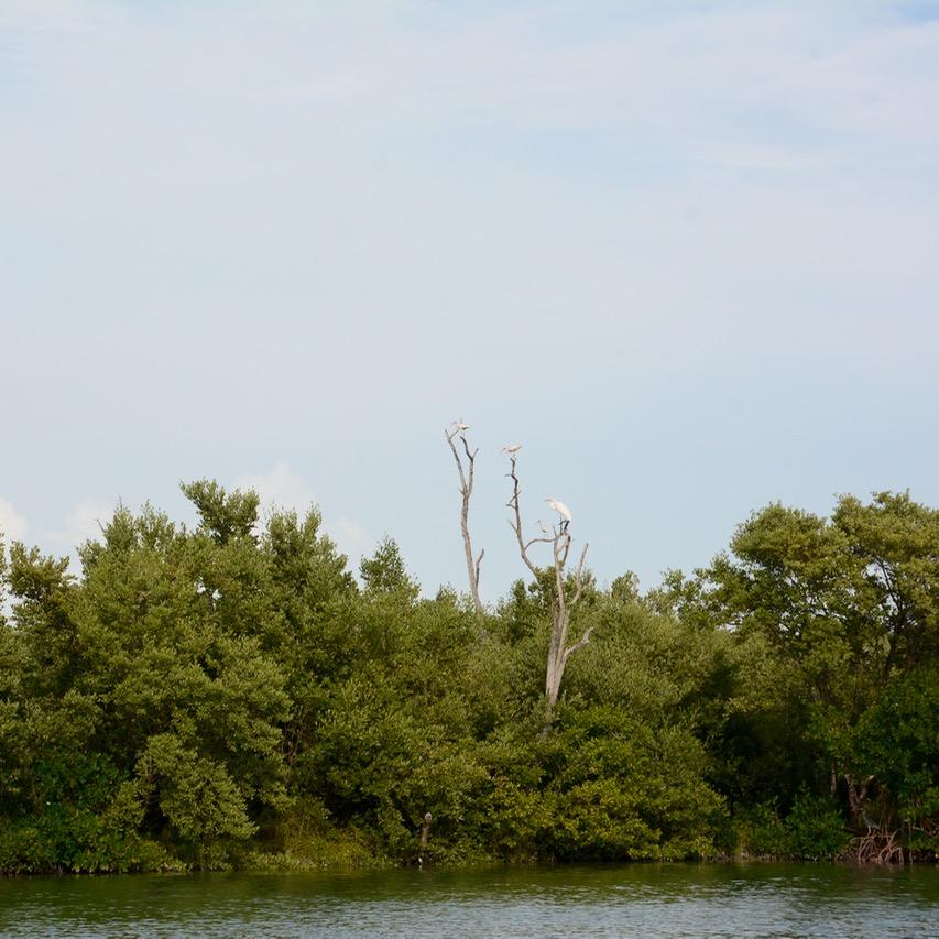 Travel with children kids mexico rio lagartos egret