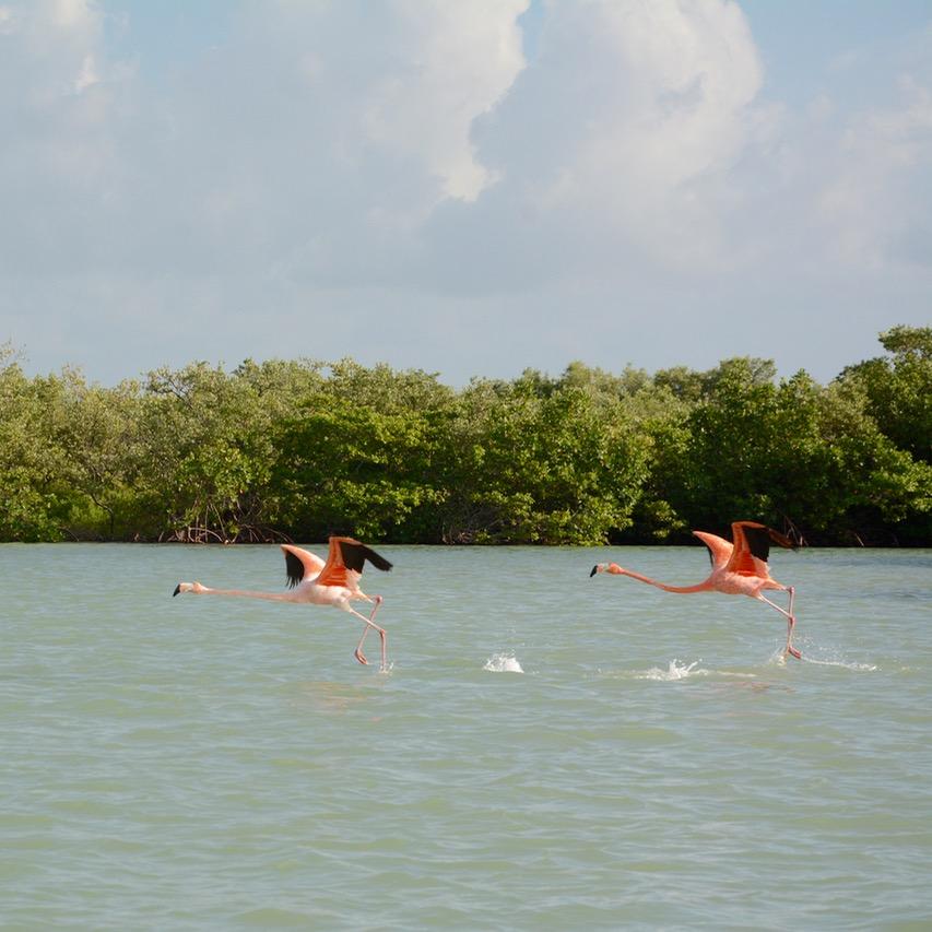 Travel with children kids mexico rio lagartos flamingoes in flight