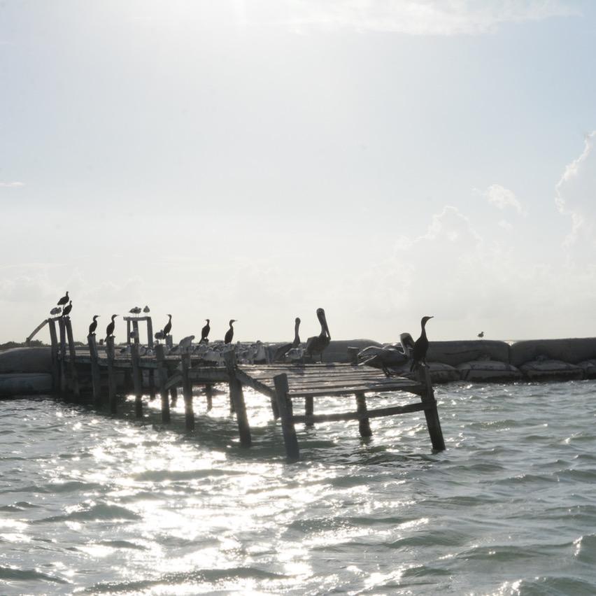 Travel with children kids mexico rio lagartos  birds jetty