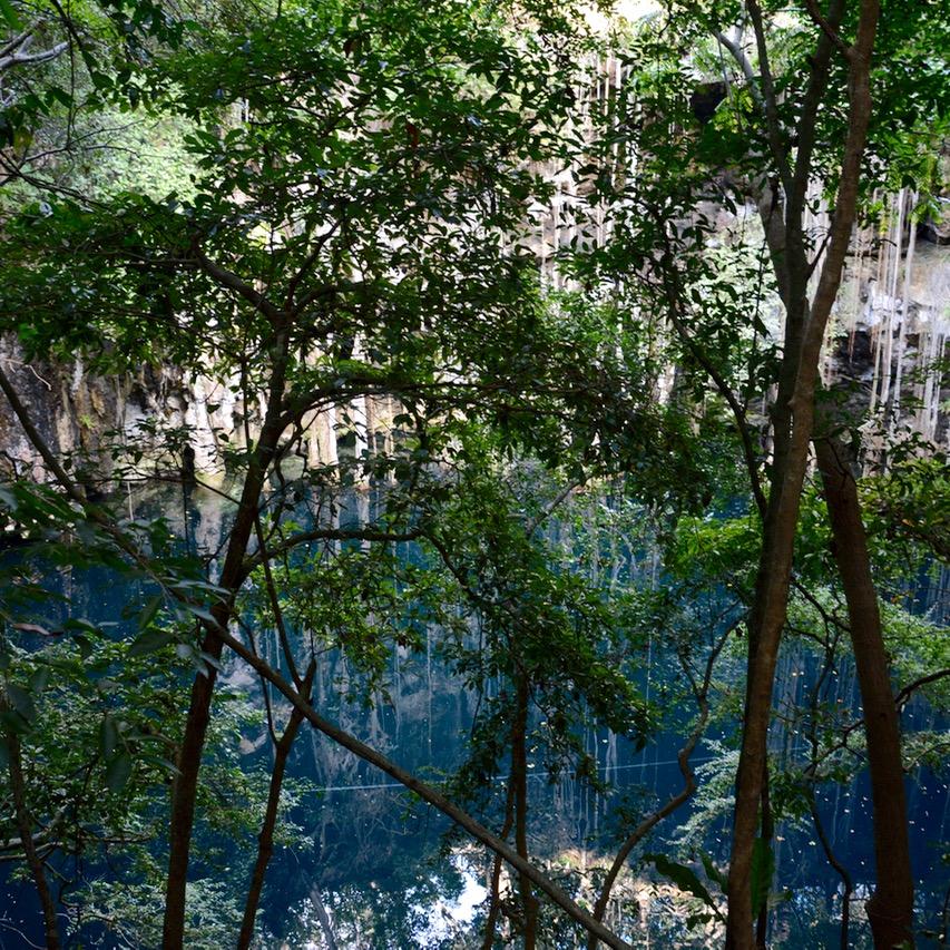 travel with children kids Yokdzonot Cenote tree
