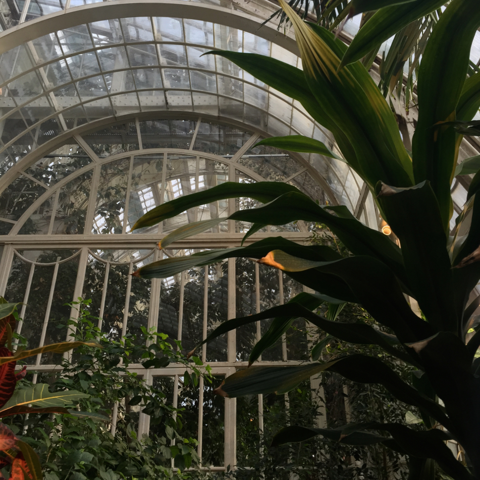 Vienna Wien Austria with children kids schmetterlingshaus glasshouse