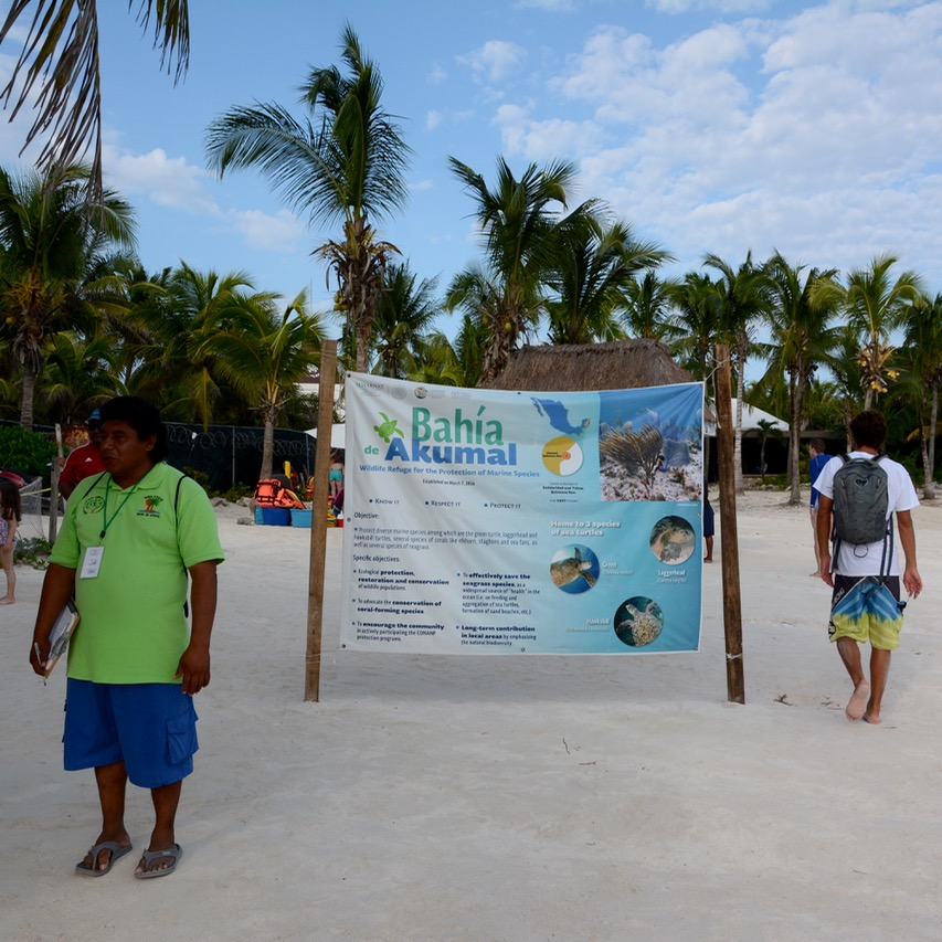Travel with children mexico akumal turtle beach