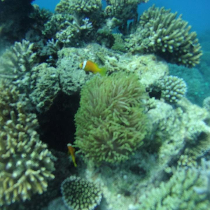 travel with children kids maldives lux south ari atoll nemo