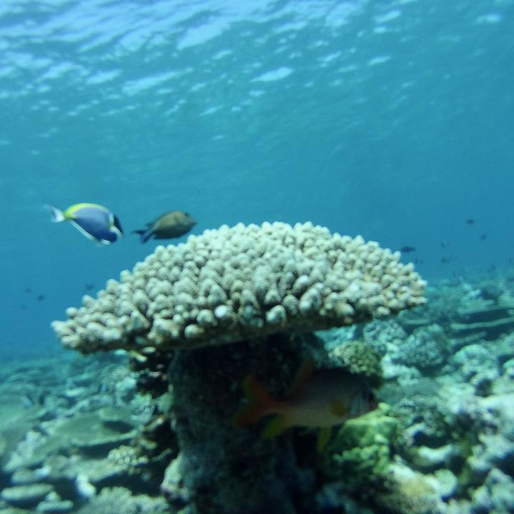 travel with children kids maldives lux south ari atoll snorkelling dori