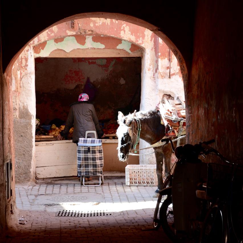 travel with children kids morocco marrakech souk donkey