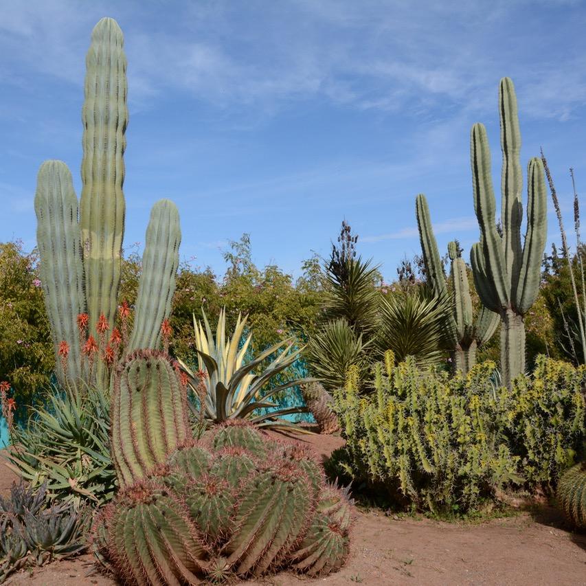 travel with children kids marrakech morocco anima garden andre heller cacti garden