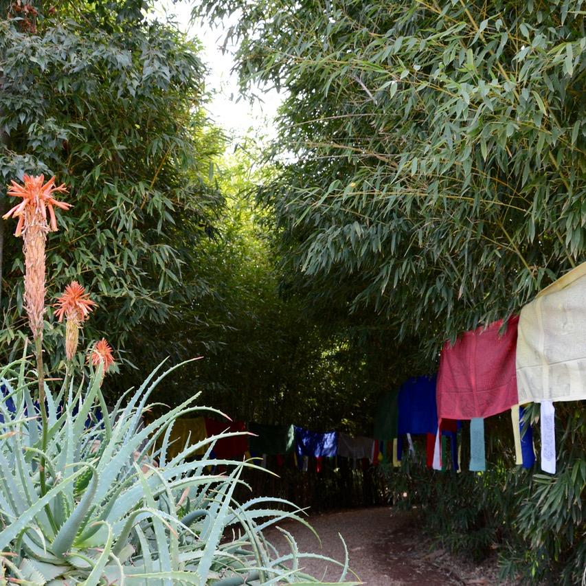 travel with children kids marrakech morocco anima garden andre heller bamboo grove