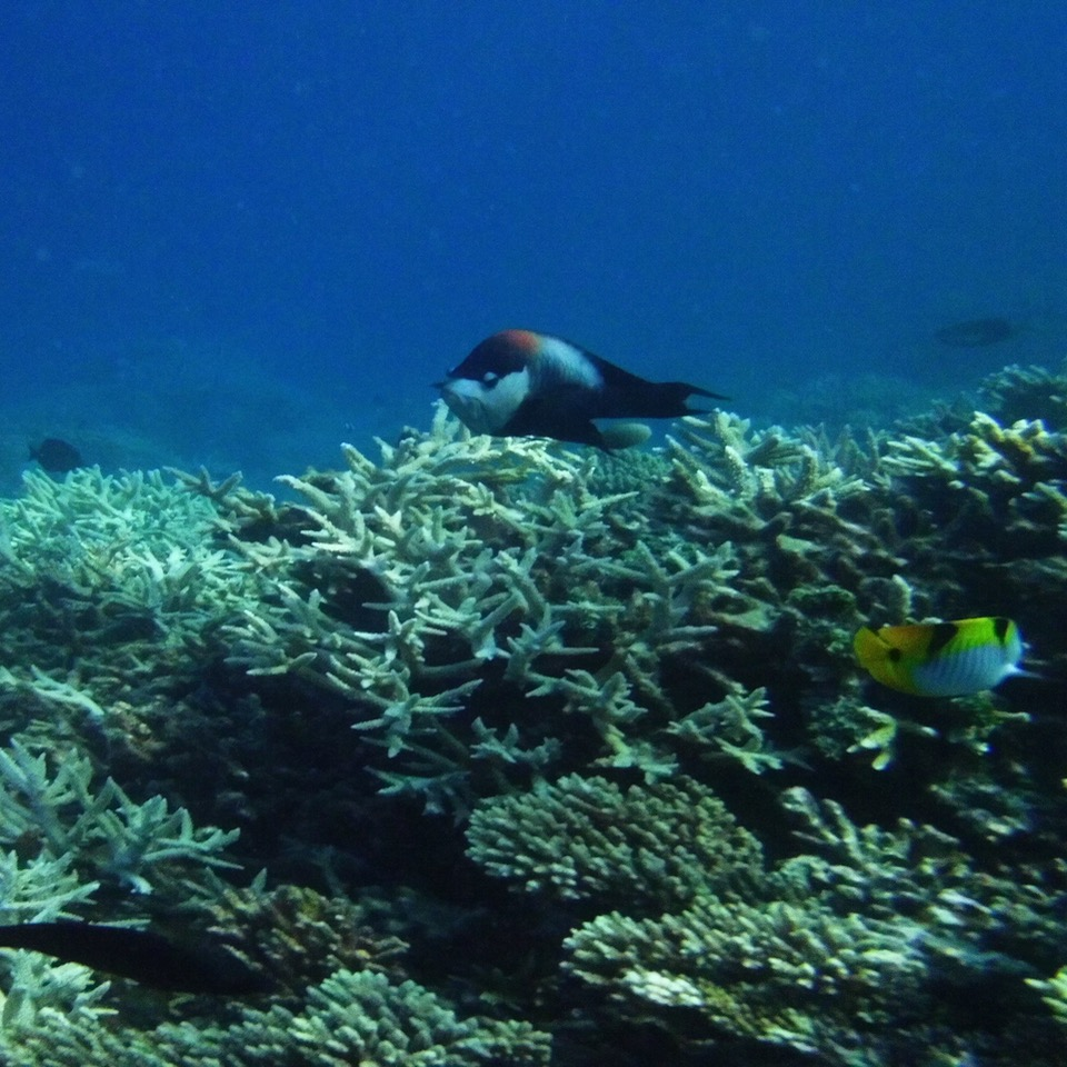 travel with children kids maldives lux south ari atoll fish