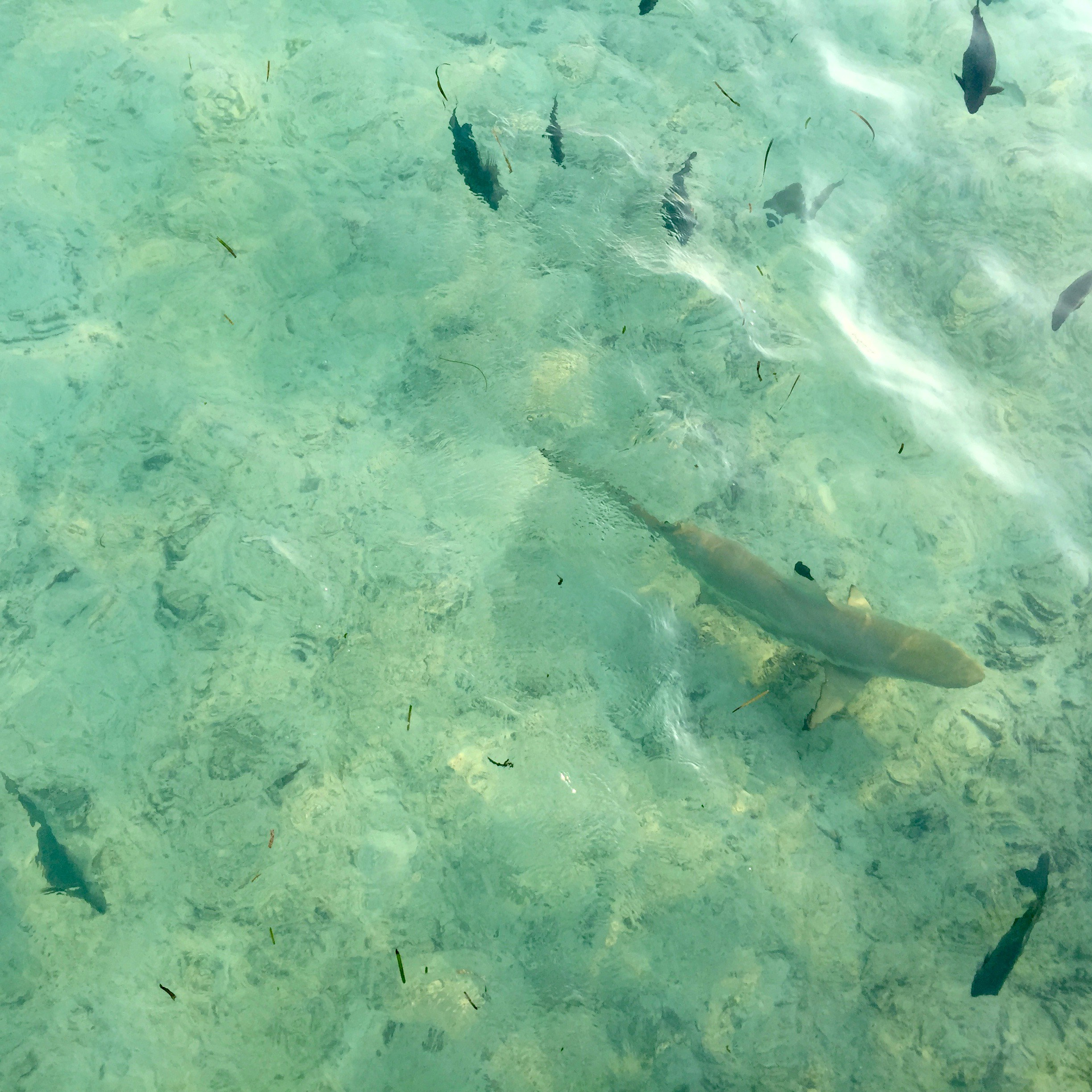 travel with children kids maldives lux south ari atoll black tip shark