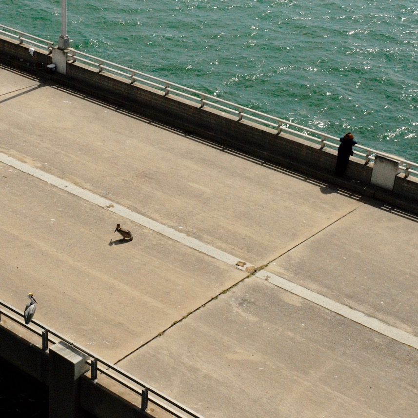 travel with kids children miami usa south beach pelicans