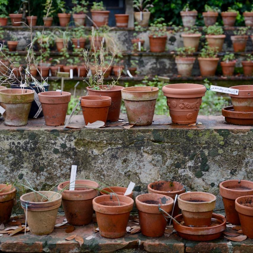 travel with kids children pisa italy botanic garden plants pots