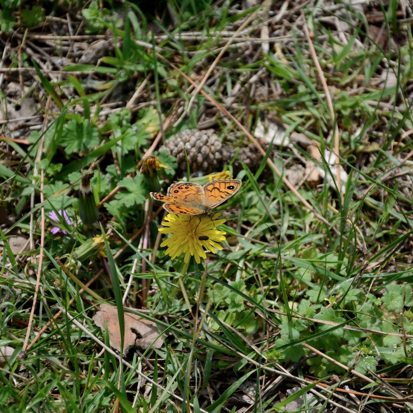 travel with kids children pisa italy nature park san rossore butterfly