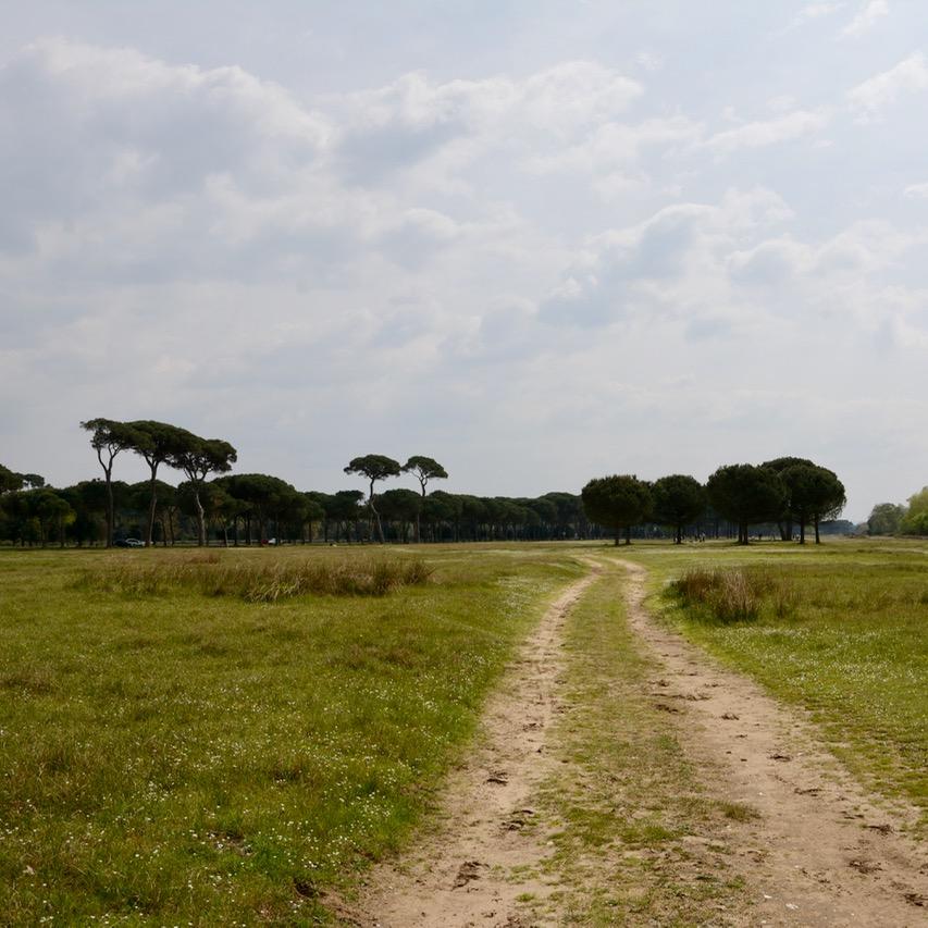 travel with kids children pisa italy nature park Migliarino hiking path
