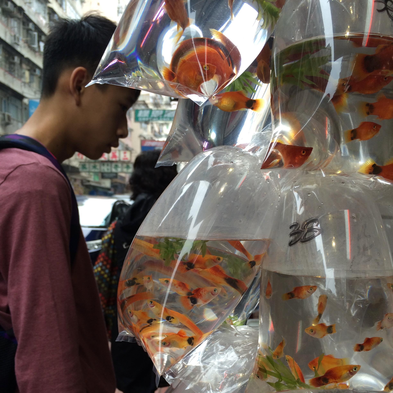 hong kong with kids children kowloon goldfish market