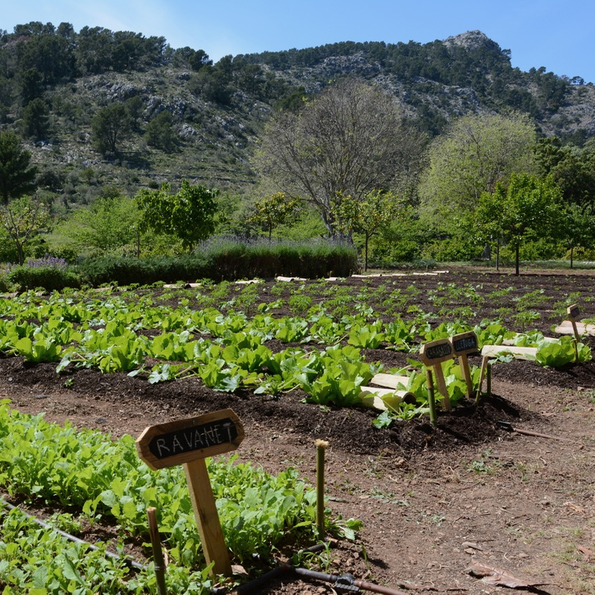 travel with kids children mallorca spain raixa estate vegetable garden