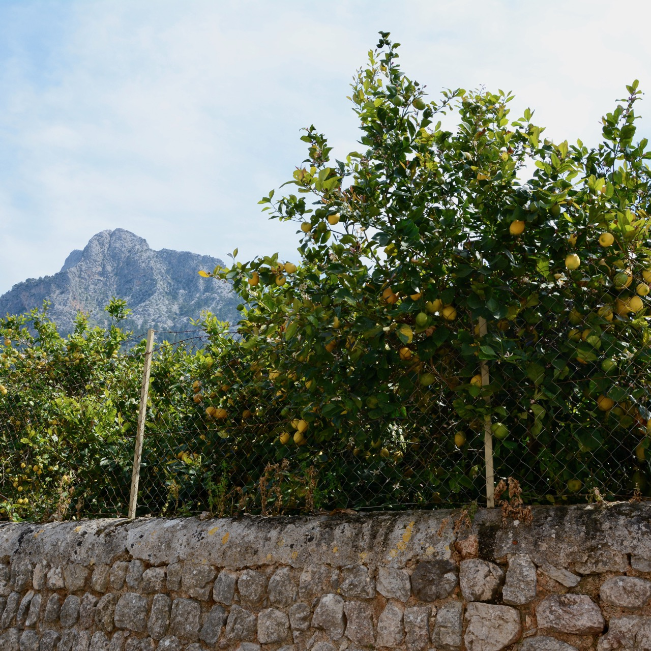 travel with kids children soller mallorca spain hiking fornalutx lemon grove