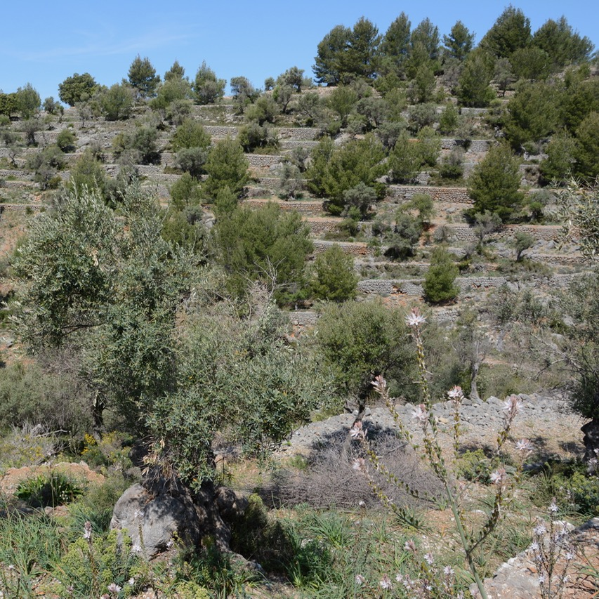 travel with kids children soller mallorca spain hiking cala tuent olive grove